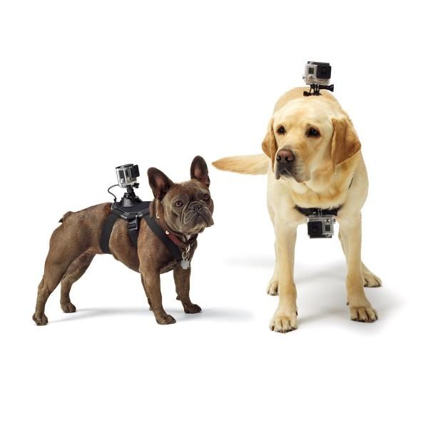 Accesorio GoPro Arnes para perros (Garantía España)